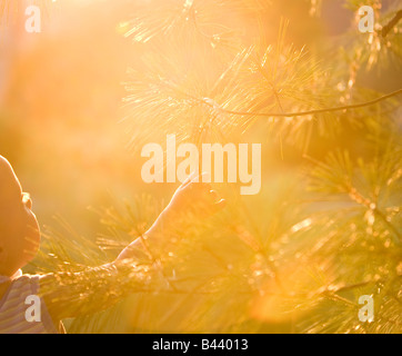 Young boy feeling branches on a tree - Stock Photo