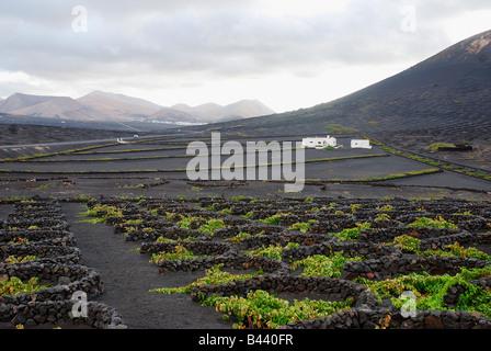 Vineyards in La Geria. Lanzarote island. Canary Islands. Spain. - Stock Photo