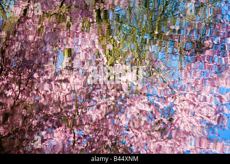 Spring blossoms reflecting in lake - Stock Photo
