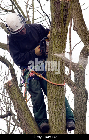 Tree feller cutting through a thick tree trunk - Stock Photo