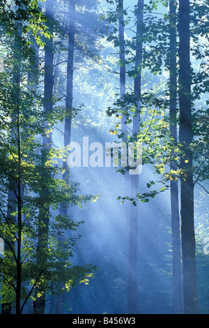 Light Rays filter through forest trees, by Bill Lea/Dembinsky Photo Assoc - Stock Photo
