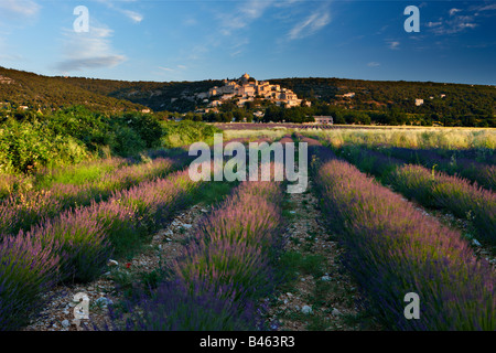 rows of lavender in a field with the village of Simiane-la-Rotonde beyond, the Vaucluse, Provence, France - Stock Photo