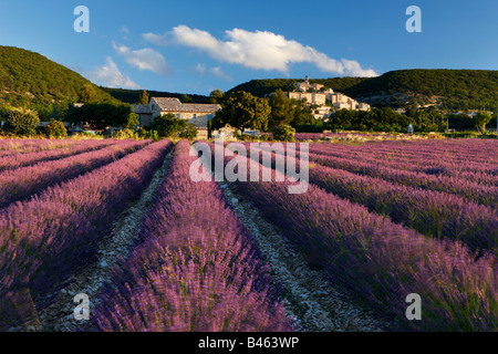 a lavender field with the village of Banon beyond, the Vaucluse, Provence, France - Stock Photo