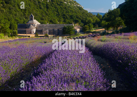 a lavender field in front of the Abbaye de Senanque, near Gordes, the Vaucluse, Provence, France - Stock Photo
