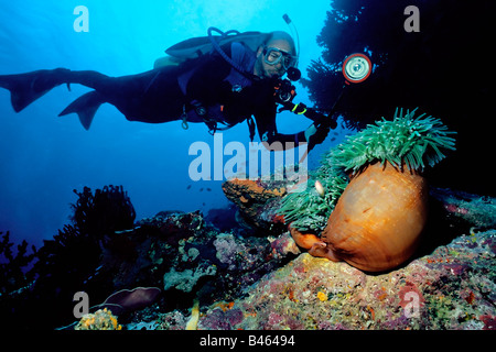 Diver demonstrating perfect neutral buoyancy as he hovers over a huge orange anemone with a clownfish colony on - Stock Photo