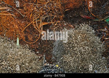 scrap metal shavings - Stock Photo