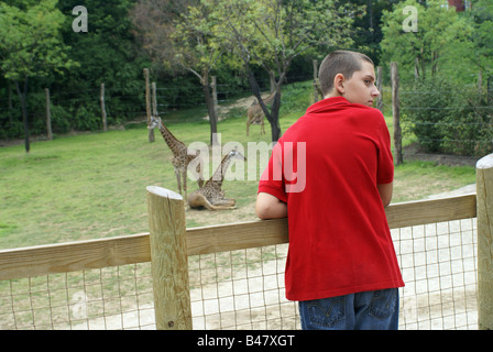 Giraffe Exhibit - Stock Photo