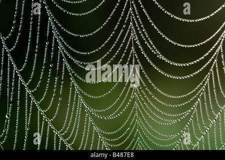 Dew on spider's orb web. Surrey, UK - Stock Photo