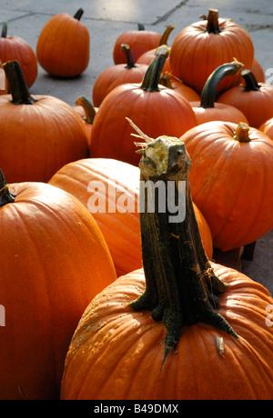 Autumn Pumpkin Festival, Vaduz FL - Stock Photo
