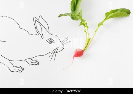 Drawing of rabbit smelling fresh radish - Stock Photo