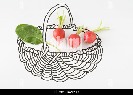 Fresh radishes in drawing of basket - Stock Photo
