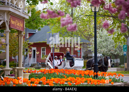 Horse and carriage outside the Prince of Wales Hotel (built in 1864) surrounded by colourful tulip flowers, Tulipa - Stock Photo