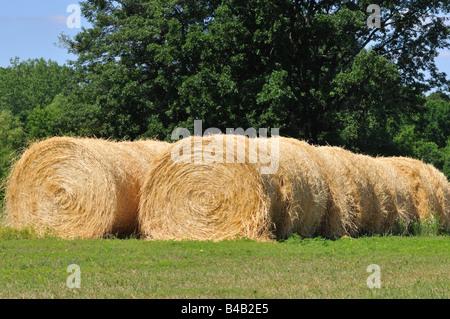 Hay Rolls. - Stock Photo