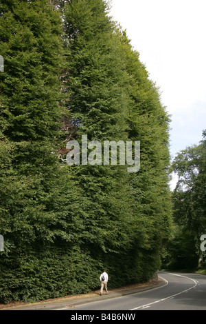 The area of Perthshire, Scotland. The Meikleour Beech Hedge on the A93 is reputedly the highest hedge in the world. - Stock Photo