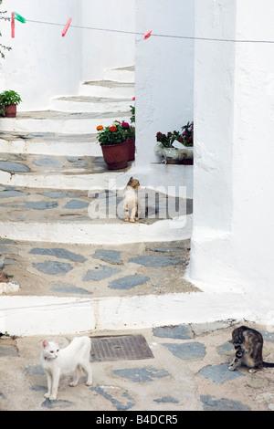 Cats on steps in Skopelos town the Sporades Greek Islands Greece - Stock Photo