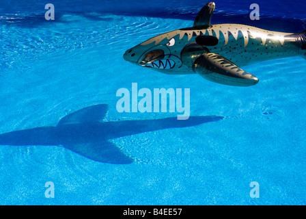 SHARK IN POOL - Stock Photo