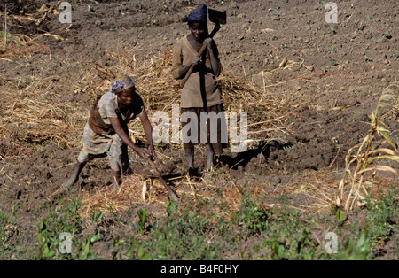 Workers at an agriculture redevelopment project in war-ravaged Angola. - Stock Photo