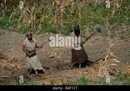 Women working on an agriculture redevelopment project in war-ravaged Angola. - Stock Photo