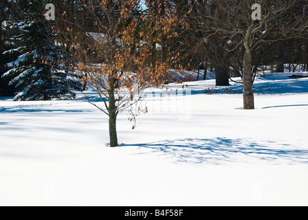 A canadian winter scene at Gairloch Gardens in Oakville, Ontario,Canada - Stock Photo