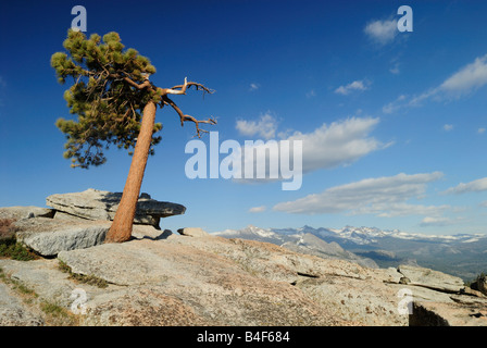 Lone pine tree on top of Sentinel Dome in Yosemite National Park, California - Stock Photo
