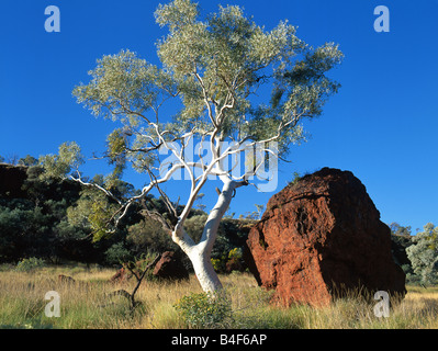 Eucalyptus Gum Tree and Red Boulder, Pilbara, Western Australia. - Stock Photo