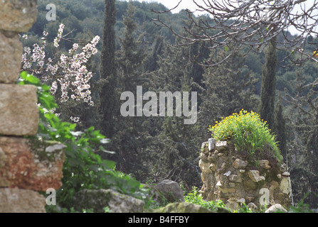 Spring time in Upper Galilee Israel - Stock Photo