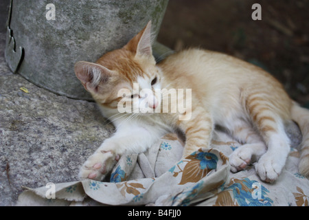 A cute kitten lying in a sleepy mood - Stock Photo