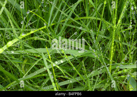 Close up of droplets on wet green grass - Stock Photo