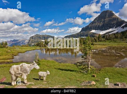A mother and kid mountain goat on hidden lake logan pass Glacier National Park - Stock Photo