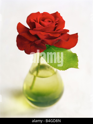 red rose in green glass vase - Stock Photo