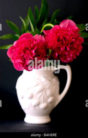 Two Peonies in a vase - Stock Photo