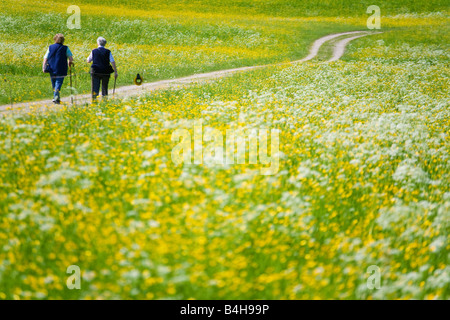 Rear view of senior women walking in field Flachgau Salzburg Austria - Stock Photo