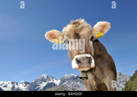Close-up of cowbell, Trentino Alto Adige, Italy - Stock Photo