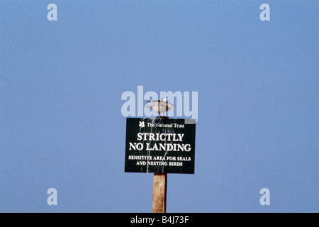 Close up of seagull on No Mooring sign against blue sky - Stock Photo