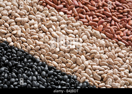 Assorted dried common beans - Stock Photo
