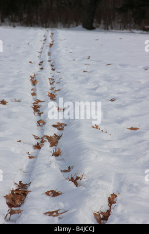 Snowy cross country ski tracks covered in fallen leaves - Stock Photo
