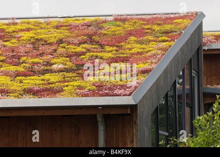 Sedum or 'living roof' on a school in Gelsenkirchen, North Rhine-Westphalia, Germany. - Stock Photo
