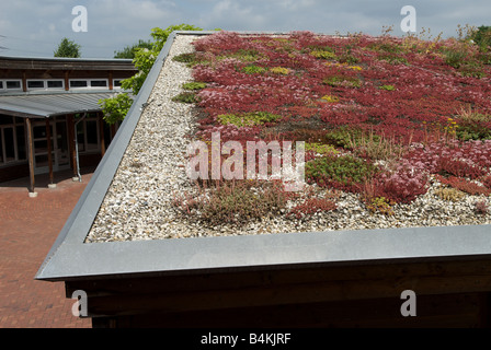 Sedum or 'living roof' on a school classroom in Gelsenkirchen, North Rhine-Westphalia, Germany. - Stock Photo