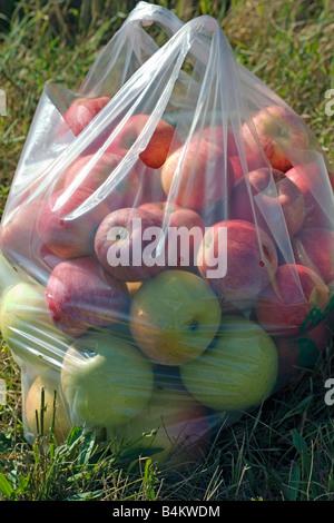 Freshly picked apples - Stock Photo
