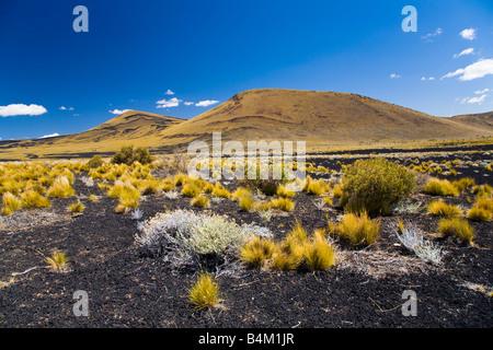 Argentina Mendoza Parque Provincial Payunia The barren volcanic landscape of the reserve - Stock Photo