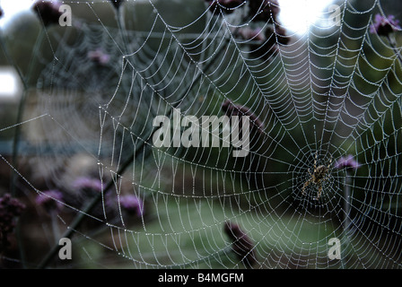 Spider in the centre of a web - Stock Photo