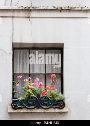 Window box in front of wooden sliding sash window containing geraniums London UK autumn - Stock Photo