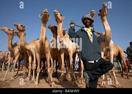 Camel market in Hargeisa, Somaliland, Somalia - Stock Photo