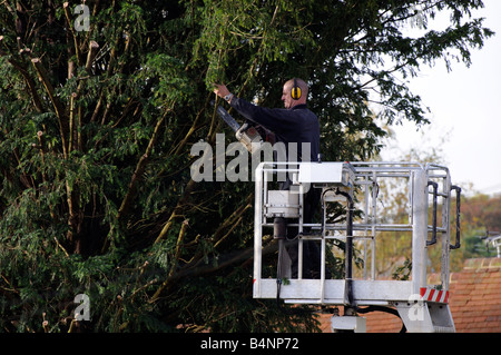 Tree surgeon using a chain saw from a cherrypicker mobile platform to cut a Yew tree - Stock Photo