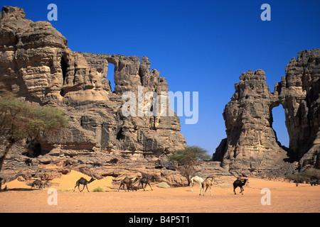 Algeria Djanet Landscape Sand dunes Camels in front of rocks Sahara Desert - Stock Photo