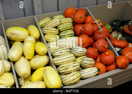 Different sorts of squash on farm market stall - Stock Photo