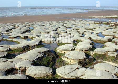 A coastal geological SSSI near Lilstock in North Somerset with foreshore exposures of Blue Lias - Stock Photo