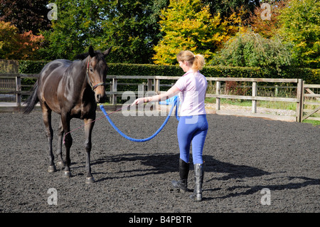 A dark bay gelding horse and horse whisperer seen during a training session England UK - Stock Photo