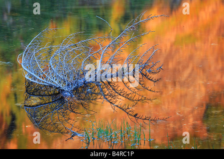Dead branch creating a stark reflection in Rampart Lakes in the Alpine Lakes Wilderness area of Washington state - Stock Photo