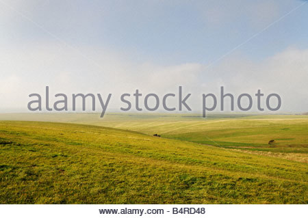 Green fields in West Sussex - Stock Photo